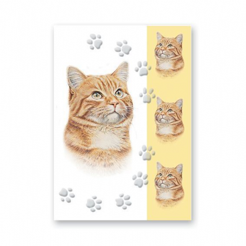 Ginger Cat card with four pictures
